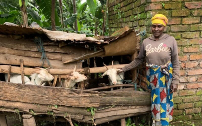 East_apaikunda-with-her-and-her-neighbour-s-goats_md_gallery